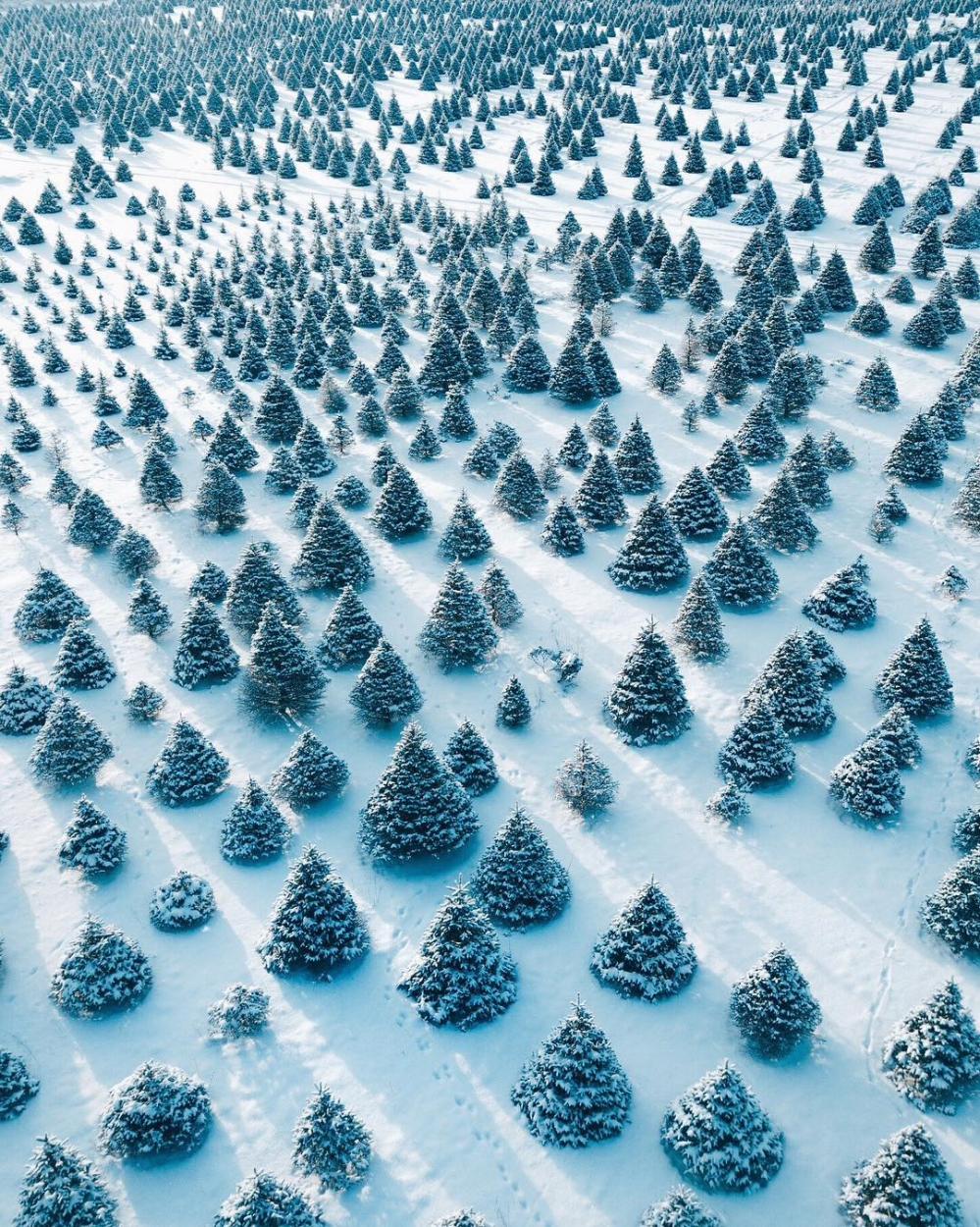 """Merry Christmas! Check out this great drone capture above a Christmas tree farm in Whitehouse, Ohio. Of the more than 160 million Christmas trees growing in the United States in 2015, roughly 2 million were in Ohio. The biggest grower in the U.S. is Oregon, which had upwards of 50 million trees growing in 2015.  41°32'32.3""""N, 83°48'51.6""""W  Source imagery: Eric Ward (@littlecoal)"""